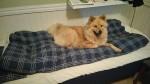 Sängen i valprummet.