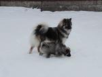 Foxy och Vilda