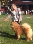 Risan Gårdens Rex