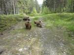 Lolita, Luna och Loka på skogsbilvägen